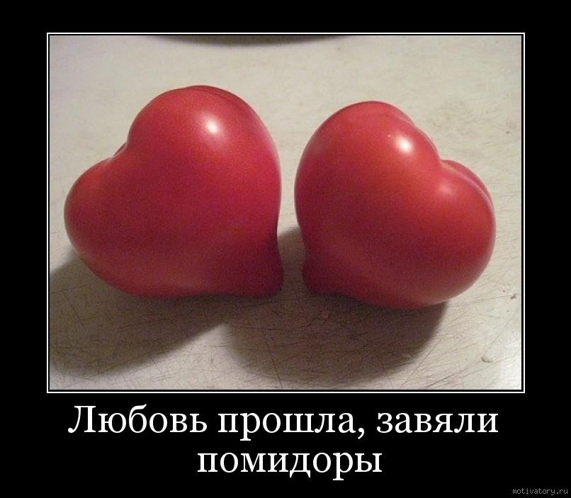 как раз а ткаченко когда завянут помидоры Sivera