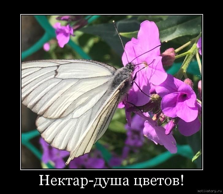 Нектар-душа цветов!