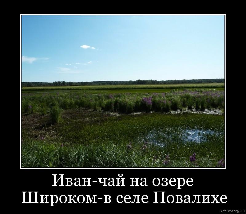 Иван-чай на озере Широком-в селе Повалихе