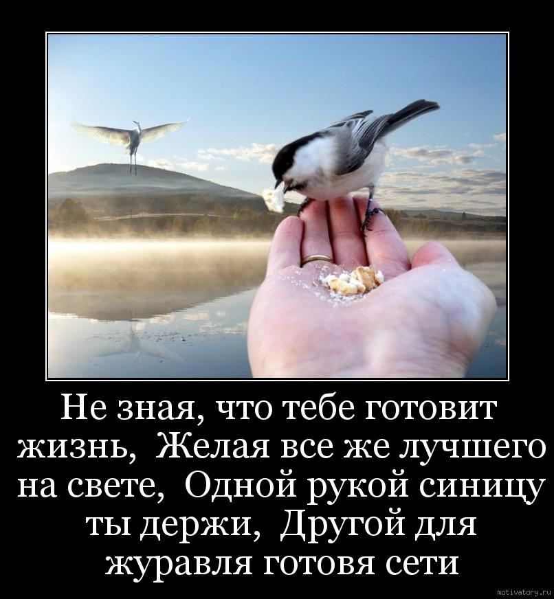 Не зная, что тебе готовит жизнь,  Желая все же лучшего на свете,  Одной рукой синицу ты держи,  Другой для журавля готовя сети