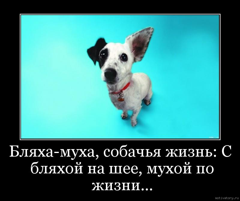 Бляха-муха, собачья жизнь: С бляхой на шее, мухой по жизни...