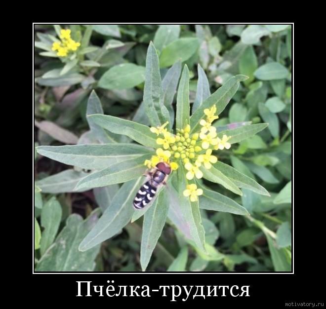 Пчёлка-трудится