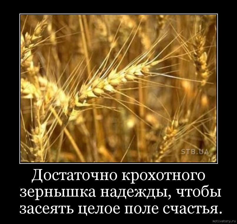 Достаточно крохотного зернышка надежды, чтобы засеять целое поле счастья.