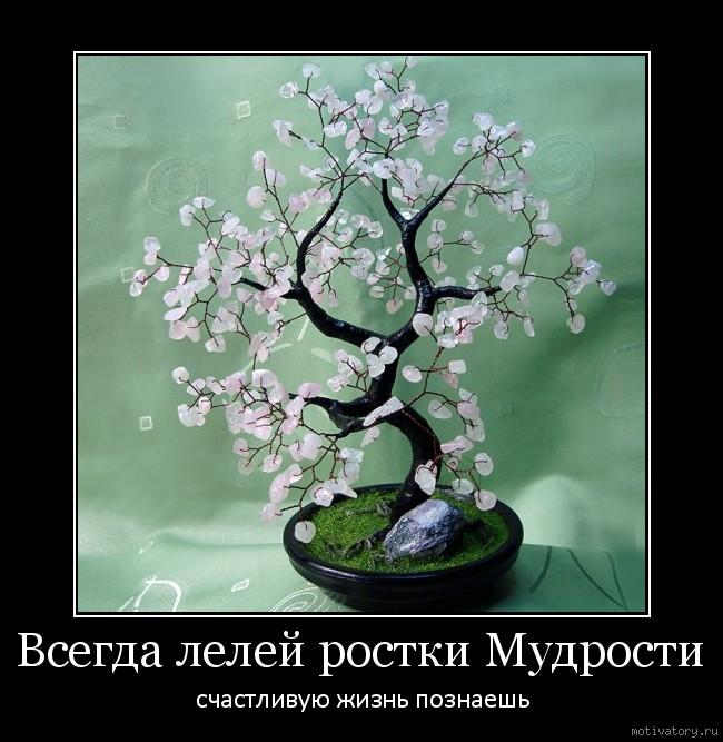 Всегда лелей ростки Мудрости