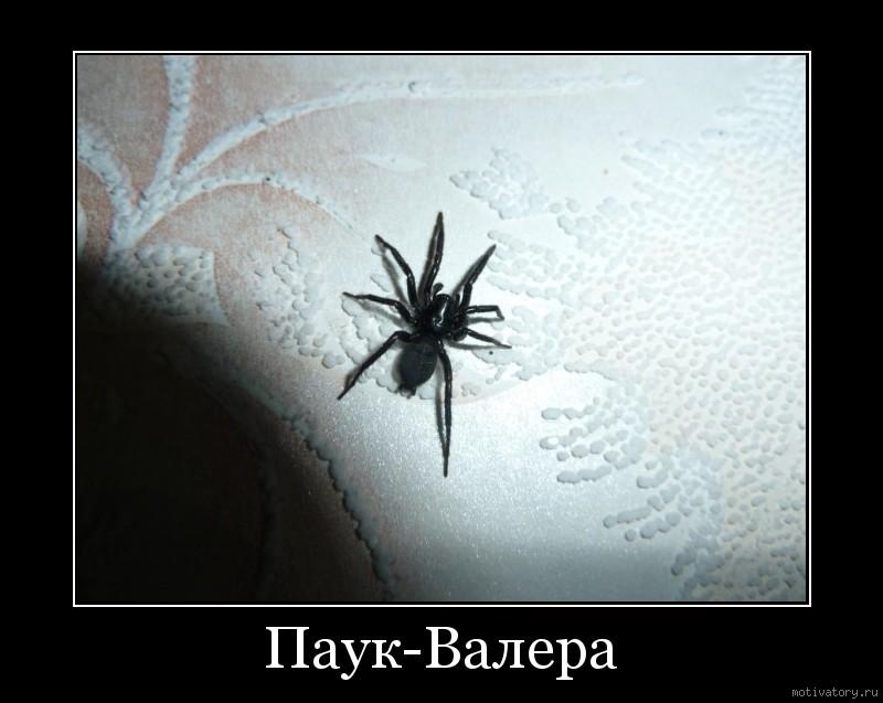 демотиваторы про паук приспособления позволяют