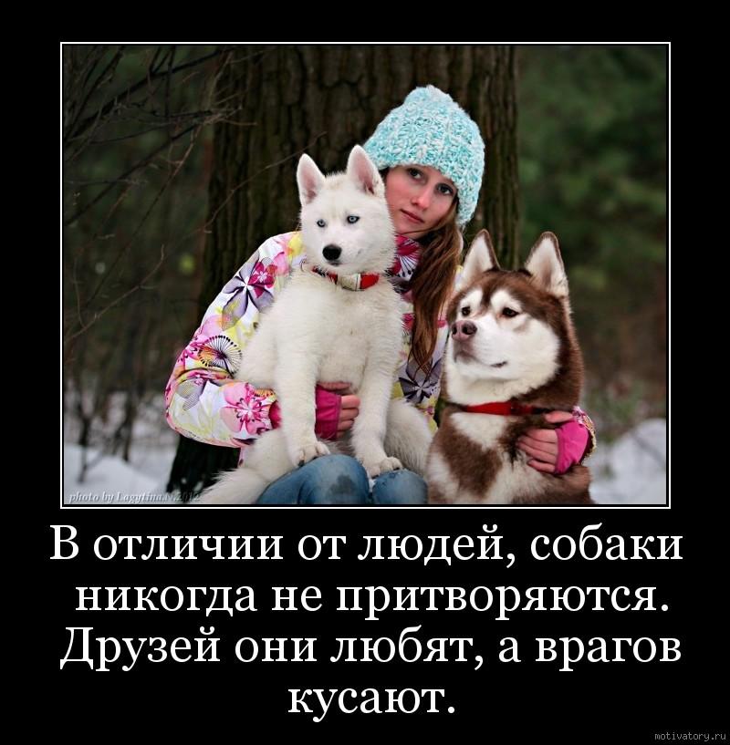 В отличии от людей, собаки никогда не притворяются. Друзей они любят, а врагов кусают.