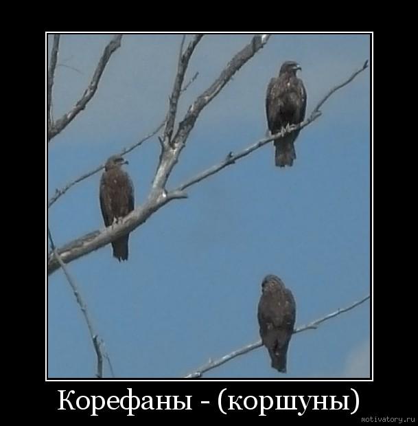 Корефаны - (коршуны)