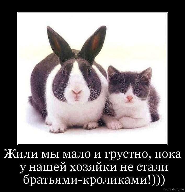 Жили мы мало и грустно, пока у нашей хозяйки не стали братьями-кроликами!)))