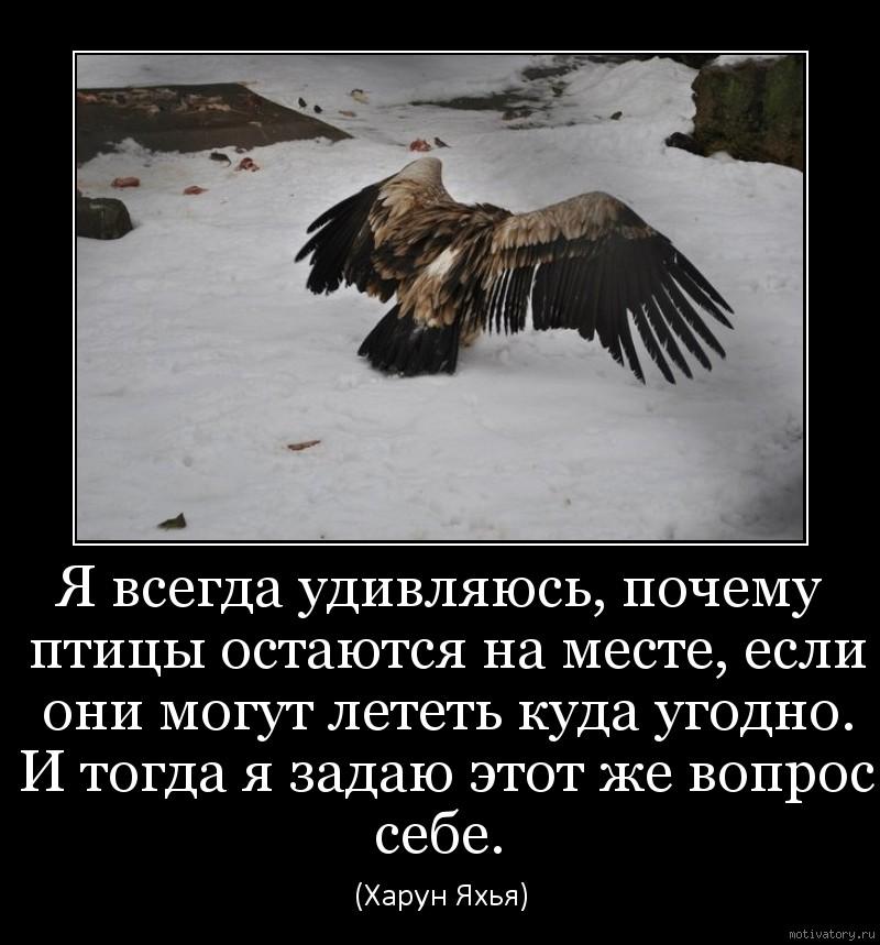 Я всегда удивляюсь, почему птицы остаются на месте, если они могут лететь куда угодно. И тогда я задаю этот же вопрос себе.