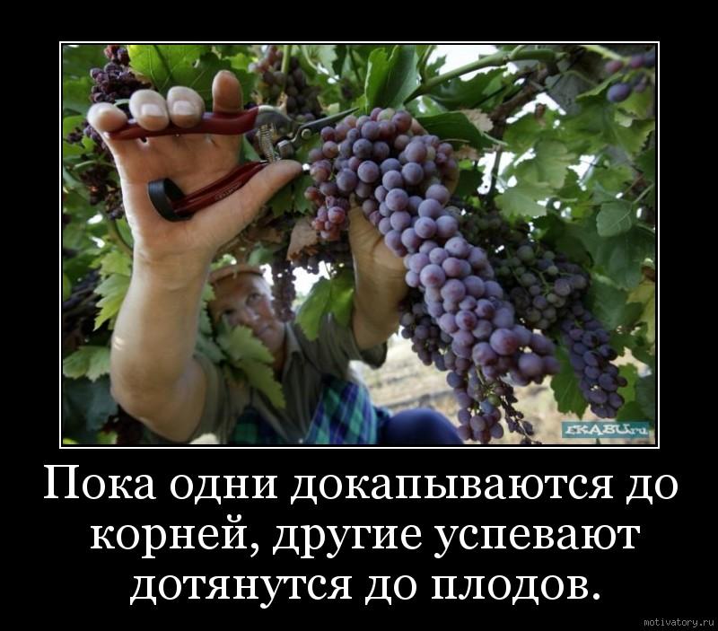 Пока одни докапываются до корней, другие успевают дотянутся до плодов.