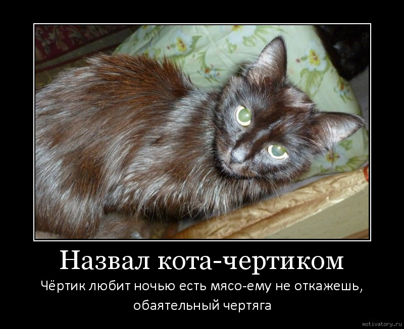 Назвал кота-чертиком