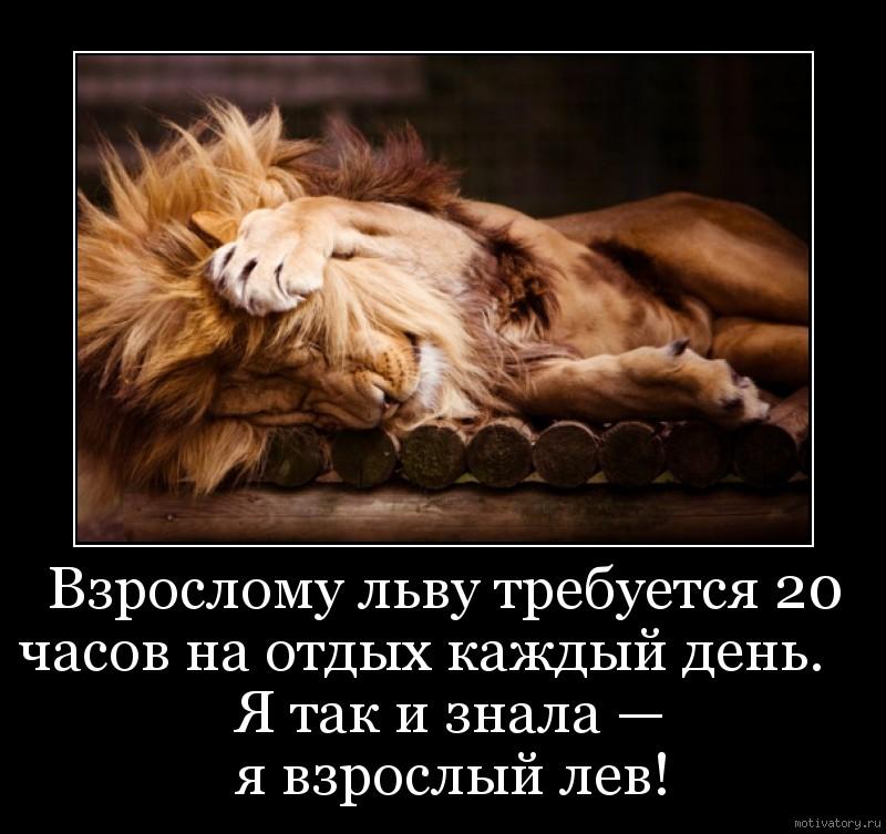 Взрослому льву требуется 20 часов на отдых каждый день.                   Я так и знала —               я взрослый лев!