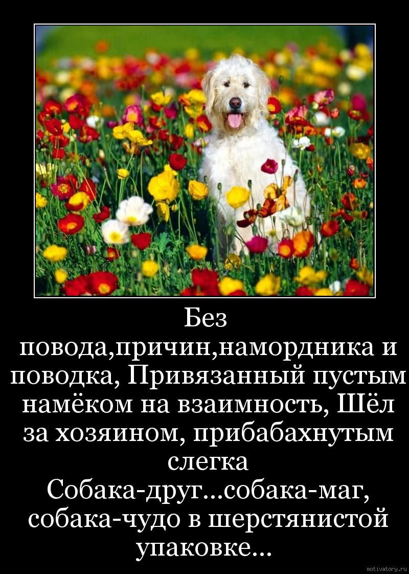 Без повода,причин,намордника и поводка, Привязанный пустым намёком на взаимность, Шёл за хозяином, прибабахнутым слегка Собака-друг...собака-маг, собака-чудо в шерстянистой упаковке...