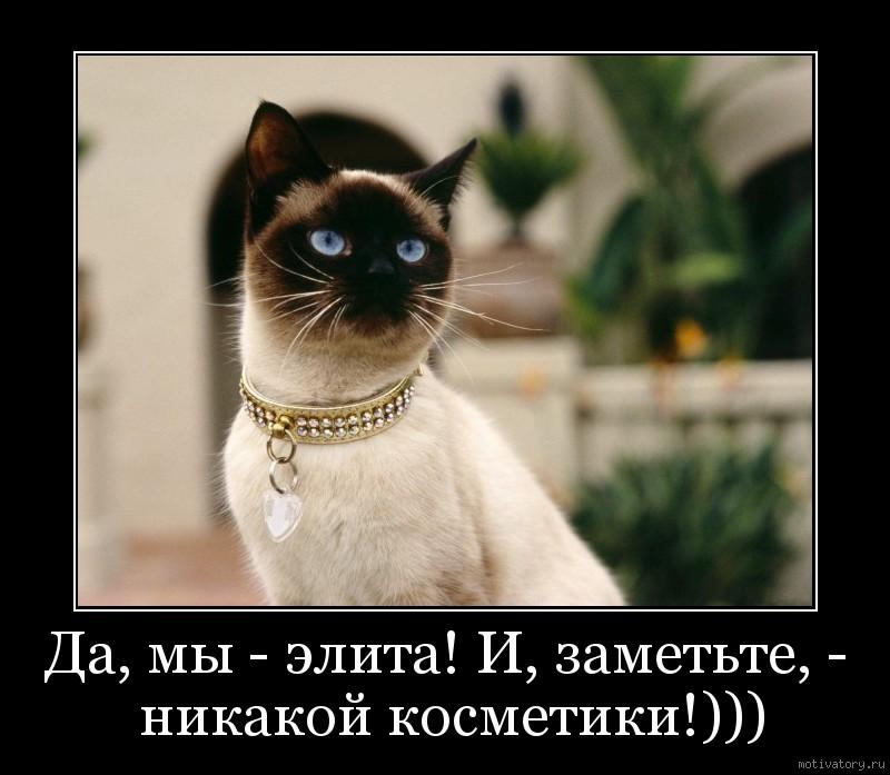 Да, мы - элита! И, заметьте, - никакой косметики!)))
