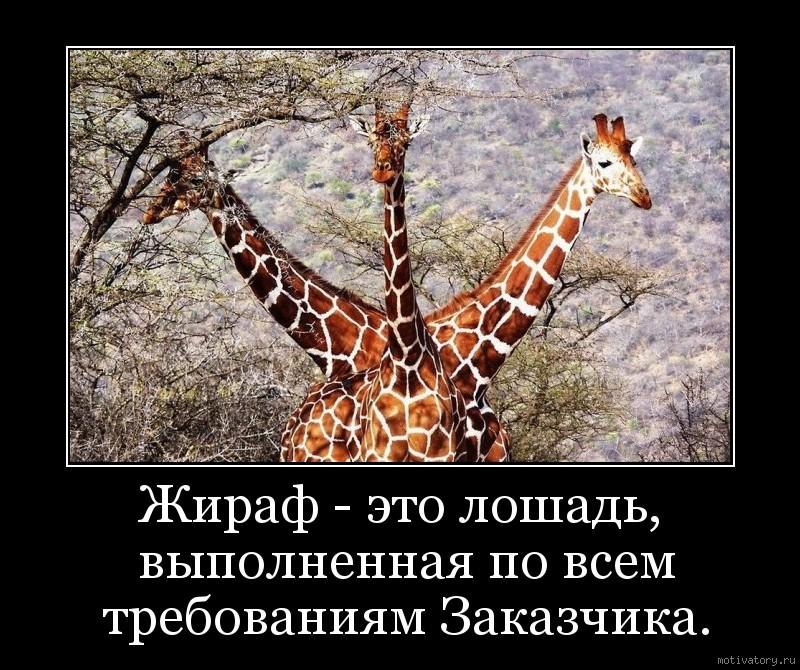 Жираф - это лошадь, выполненная по всем требованиям Заказчика.