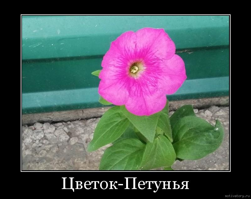 Цветок-Петунья