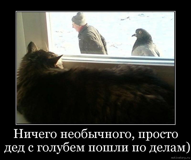 Ничего необычного, просто дед с голубем пошли по делам)