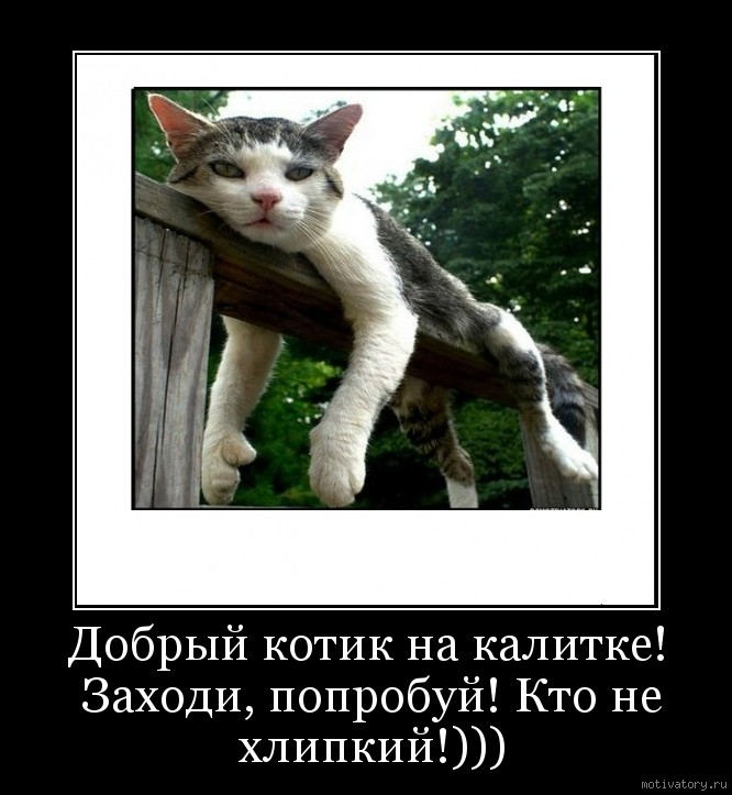 Добрый котик на калитке! Заходи, попробуй! Кто не хлипкий!)))