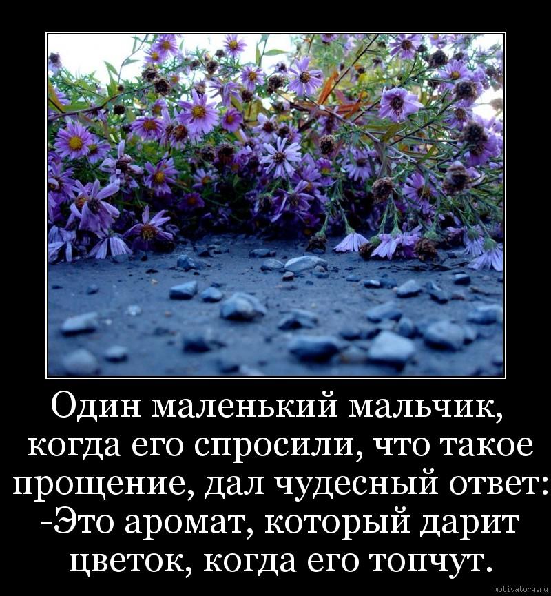 Это аромат который дарит цветок когда его