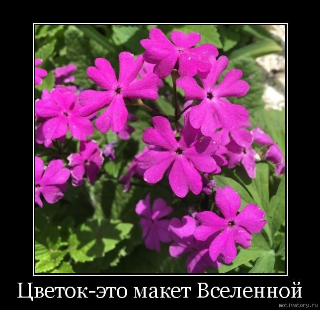 Цветок-это макет Вселенной