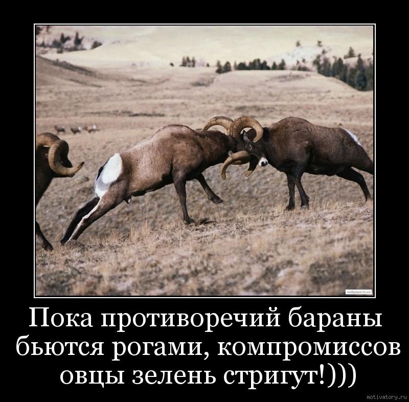 Пока противоречий бараны бьются рогами, компромиссов овцы зелень стригут!)))