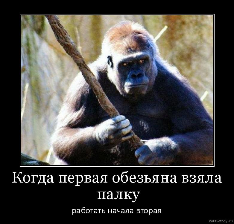 Когда первая обезьяна взяла палку