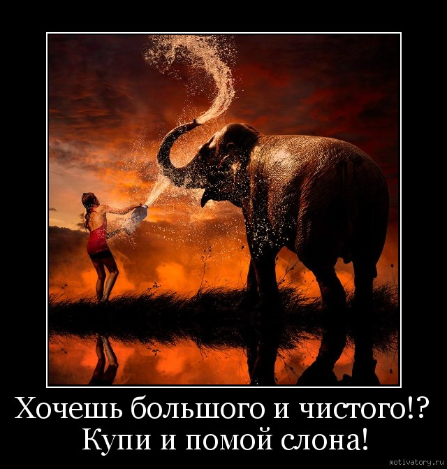 Хочешь большого и чистого!? Купи и помой слона!