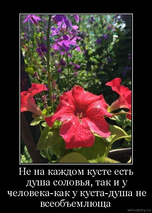 Не на каждом кусте есть душа соловья, так и у человека-как у куста-душа не всеобъемлюща