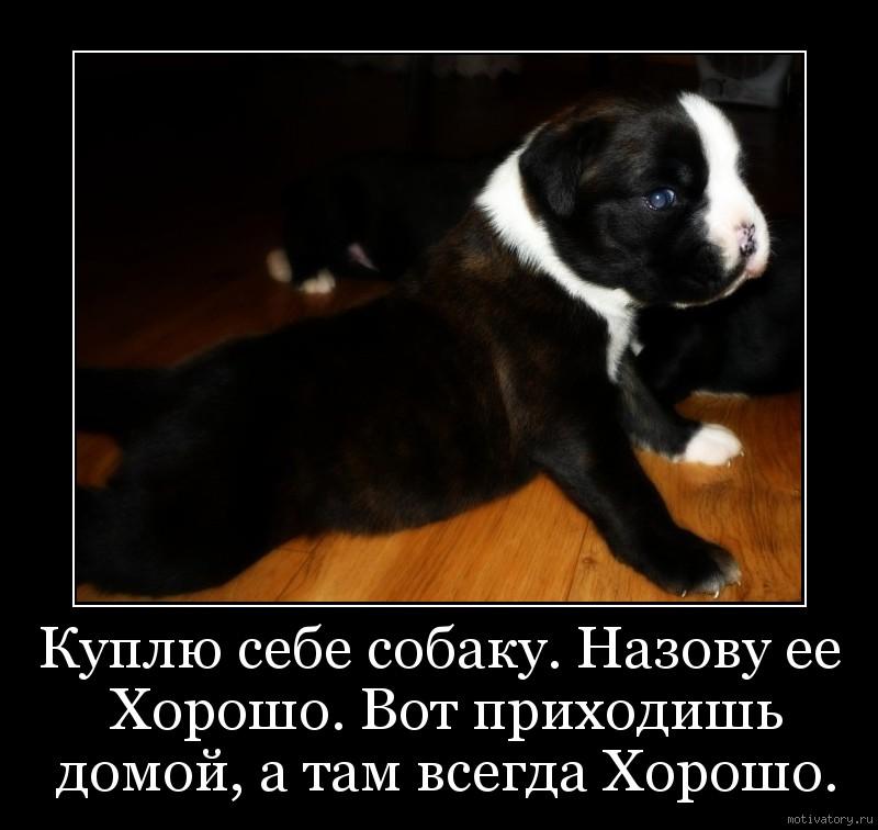 Куплю себе собаку. Назову ее Хорошо. Вот приходишь домой, а там всегда Хорошо.