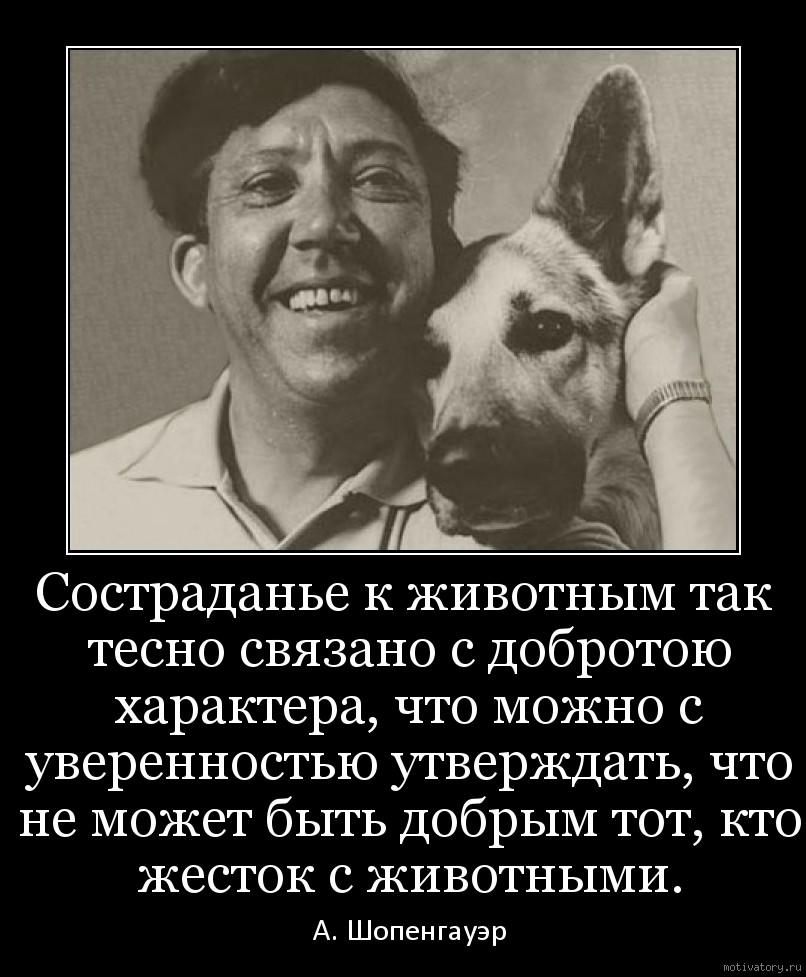 Состраданье к животным так тесно связано с добротою характера, что можно с уверенностью утверждать, что не может быть добрым тот, кто жесток с животными.