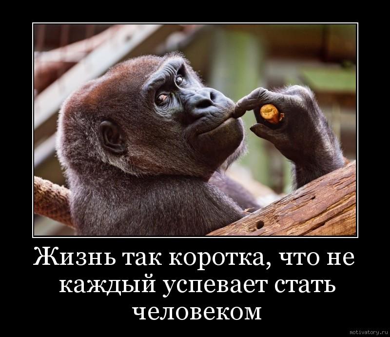 Жизнь так коротка, что не каждый успевает стать человеком