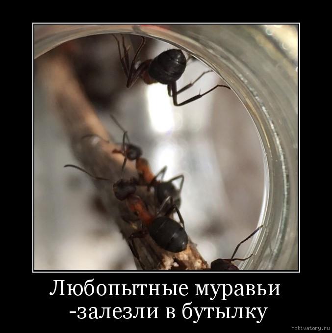 Любопытные муравьи -залезли в бутылку