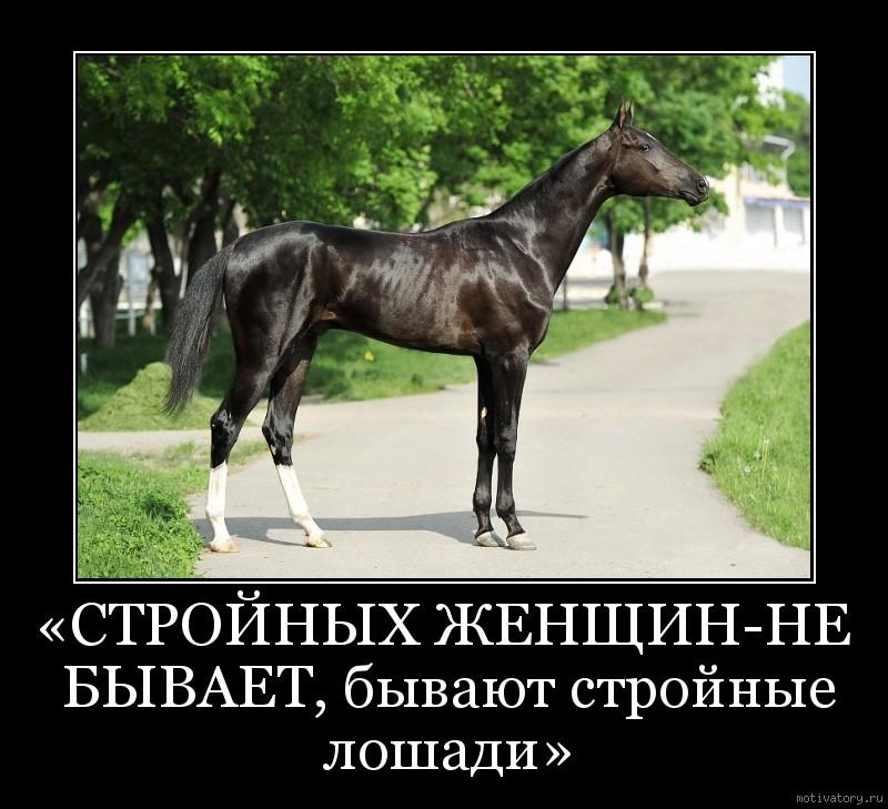 «СТРОЙНЫХ ЖЕНЩИН-НЕ БЫВАЕТ, бывают стройные лошади»