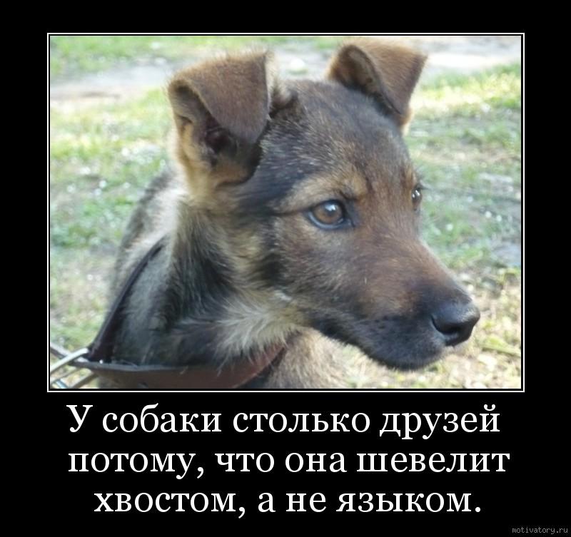 У собаки столько друзей потому, что она шевелит хвостом, а не языком.