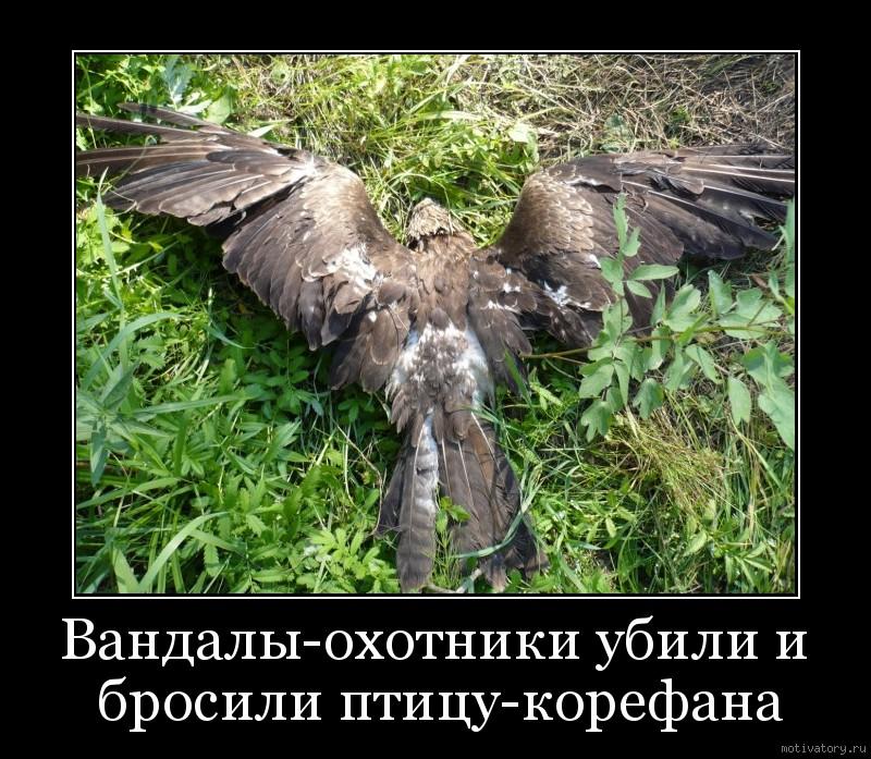 Вандалы-охотники убили и бросили птицу-корефана