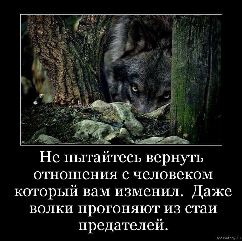 Не пытайтесь вернуть отношения с человеком который вам изменил.  Даже волки прогоняют из стаи предателей.