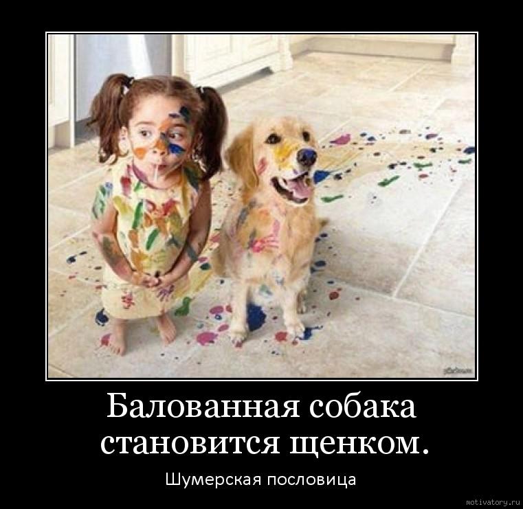Балованная собака становится щенком.