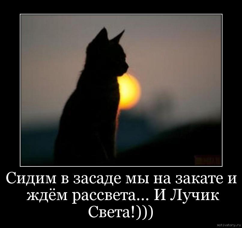 Сидим в засаде мы на закате и ждём рассвета... И Лучик Света!)))