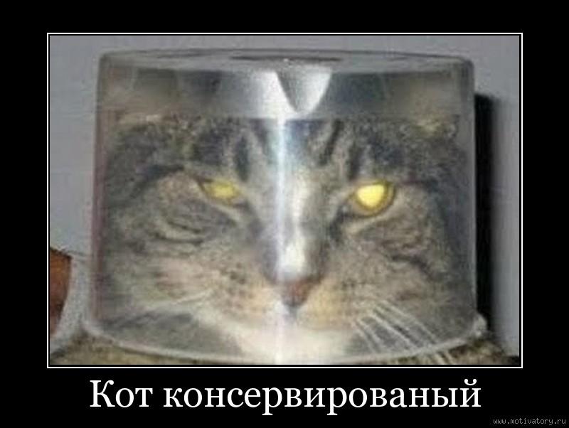 Кот консервированый
