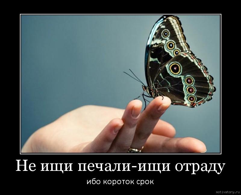 Не ищи печали-ищи отраду