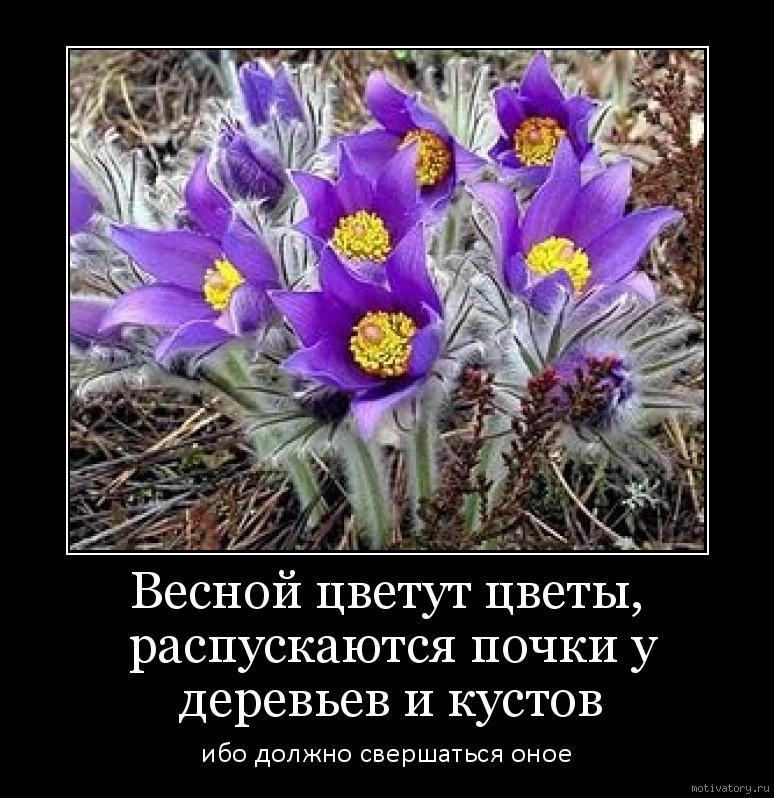 Весной цветут цветы, распускаются почки у деревьев и кустов