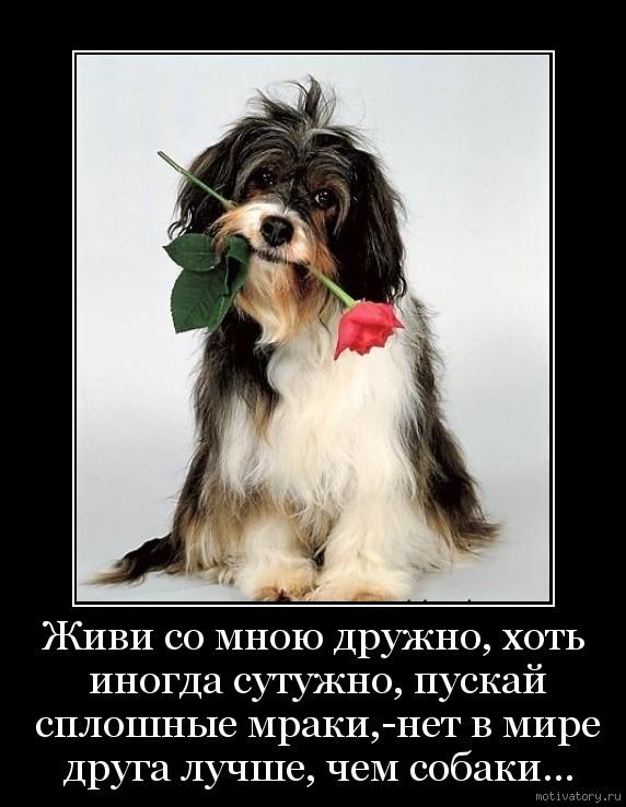 Живи со мною дружно, хоть иногда сутужно, пускай сплошные мраки,-нет в мире друга лучше, чем собаки...