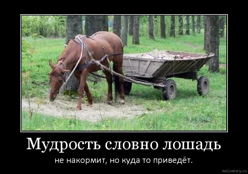 Мудрость словно лошадь