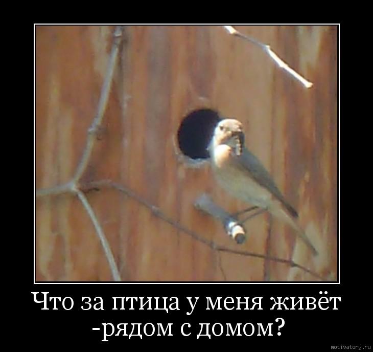 Что за птица у меня живёт -рядом с домом?