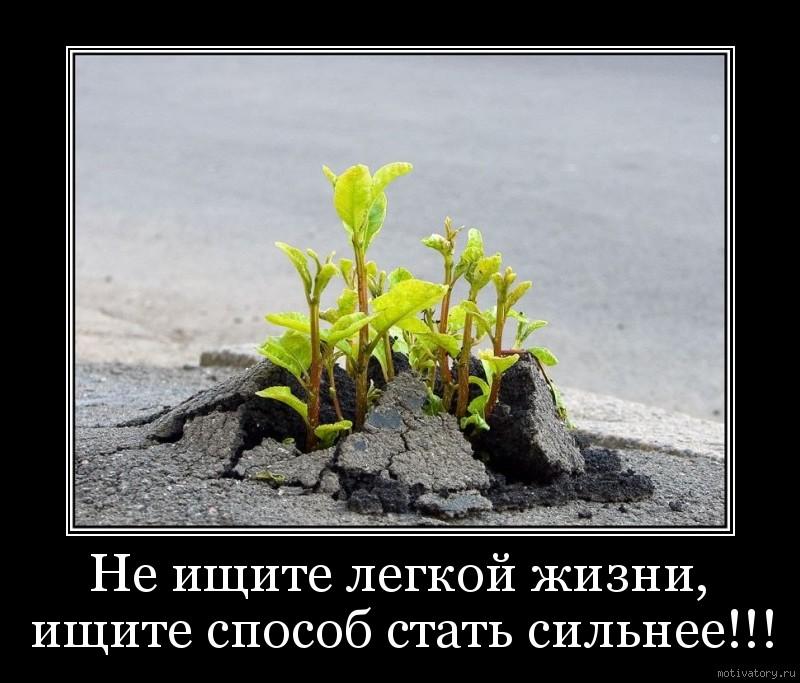 Не ищите легкой жизни, ищите способ стать сильнее!!!