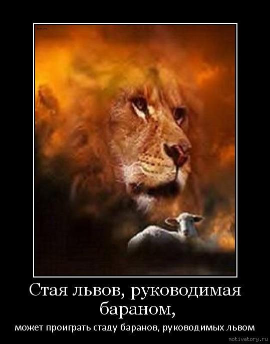 Стая львов, руководимая бараном,