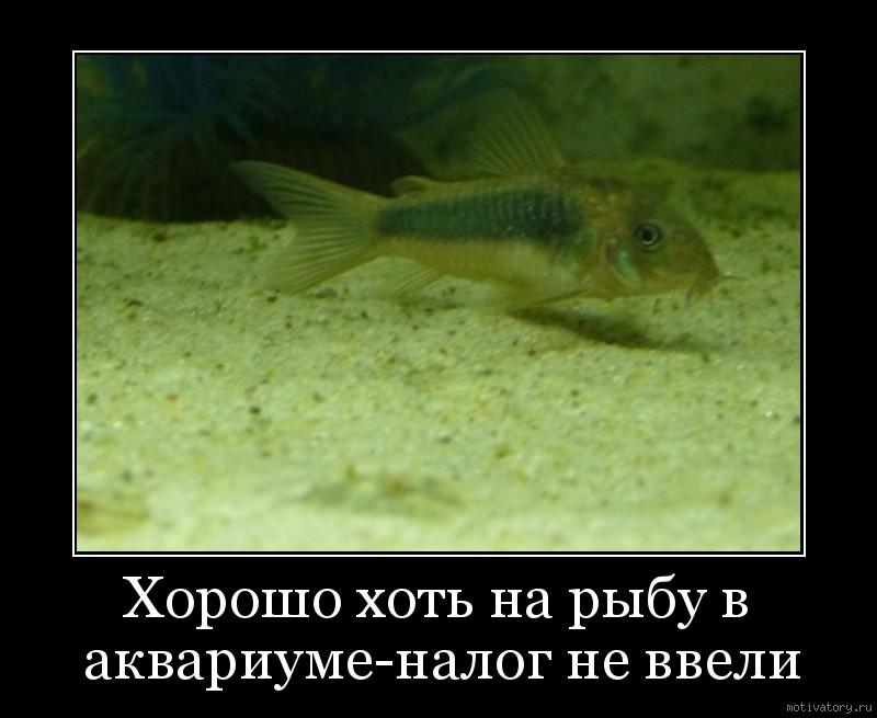 Хорошо хоть на рыбу в аквариуме-налог не ввели