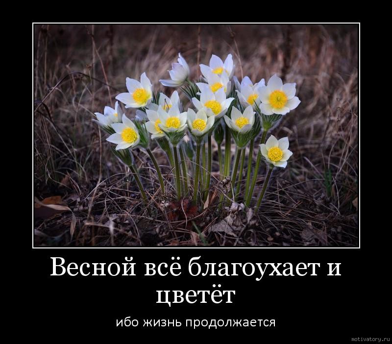 Весной всё благоухает и цветёт