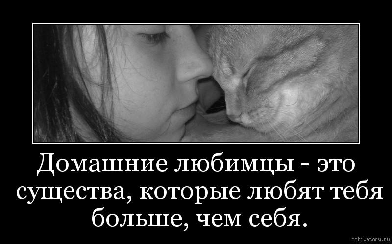 Домашние любимцы - это существа, которые любят тебя больше, чем себя.