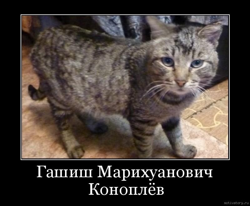 Гашиш Марихуанович Коноплёв